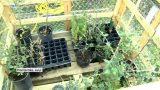 Plantada d'arbres a l'institut Vinyes Velles de Montornès