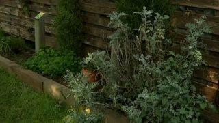 Nou taller d'horticultura ecològica i jardinera a l'Escola de la Natura de Parets