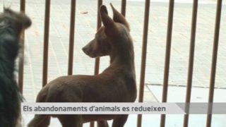 Vallès Visió Notícies 12 de juliol de 2017