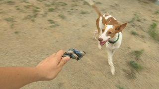 Augmenten els abandonaments de gossos a l'estiu