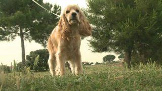 El cens de gossos de Parets ha augmentat un 33%