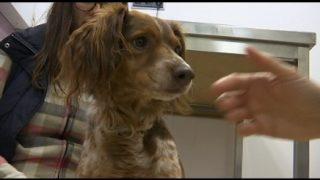 La fisioteràpia en els gossos