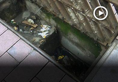 Mesures per evitar les rates i les males olors a Mollet
