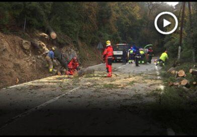 La B-500 a Sant Fost ha estat tallada fins les 12h per la caiguda d'arbres a la via